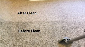 Empty Carpet Cleaning